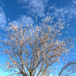 Filastrocche di primavera da Marzia Cabano