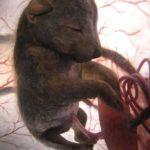 Le 7 Gravidanze più Lunghe Presenti nel Regno Animale
