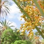 Monreale, l'Orto Botanico e tre cose che non potete perdervi a Palermo.