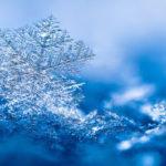 """""""Fior di neve"""" poesia di Umberto Saba"""
