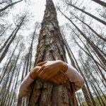 Vivere Vicino agli Alberi Aumenta la Qualità della Vita. Ecco Perché