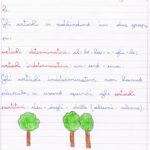 Scheda di grammatica: gli articoli – Spiegazioni, prove di verifica, ed esercizi di analisi grammaticale