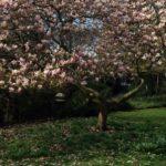 EcoFormiche: il Blog di sostenibilità di Anna e Chiara