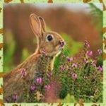 La nostra collina dei conigli