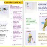 Le api: insetti molto speciali